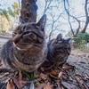 超広角レンズで猫撮影は難しい