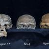 人類の進化:ホモ属各種 ⑤ホモ・エレクトス 後編