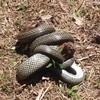 私の「イロハ」6.「へ」蛇