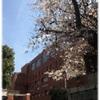 永田町・赤坂見附・国会議事堂前の桜 ~2018年度入学お祝い