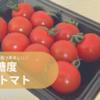 高糖度ミニトマト【麗】がとてつもなく美味しい!トマト難民はこれを買うべし。
