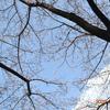 「桜」散歩🌸