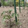野菜  植え付けと種まき