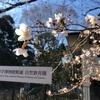 梅、桜、山吹——春の花を詠んだ歌