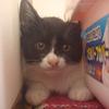 今日の黒猫モモさんの動画ー488