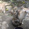 実家に帰省:猫写真 5/15