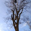 年末最終日に木登り