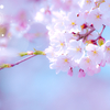 巣立った娘と2人で見た桜