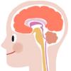 """脳のワーキングメモリーを増やす""""デュアルN バック"""""""