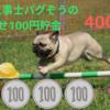 【2019最新】くるりんぱ成功率100%!⭐︎はさめる フライ返し⭐︎ってなに?!