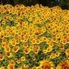 今日のマヤ暦「あるものに目を向けましょう」。KIN40 黄色い太陽・黄色い太陽・音1