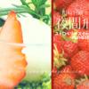 苺スイーツブッフェ「夜間飛行」川崎日航ホテル2019年1月レビューブログ