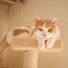 先住猫が気難しいときの多頭飼いの秘訣!飼い主の考え方も大事
