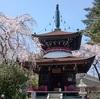桜さんぽ 奈良県その3(吉野山の桜と吉水神社・東南院・金峰山寺)