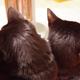 今日の黒猫モモ&白黒猫ナナの動画ー732