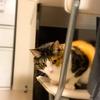 【愛猫日記】毎日アンヌさん#233