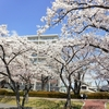 【ゆーす】4/13お花見だわっしょい!