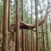 稲村ヶ岳満喫!