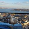 世界一周トルコ(イスタンブール)編 パンツ一丁で泡だらけにされるハマム(トルコ風呂)