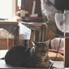 田舎のおばあちゃん家でノスタルジックなネコさん撮影