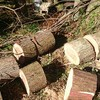 薪ストーブ始生代70 更に新しい現場。杉と桧の雑木林へ
