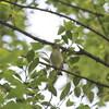 野鳥の少ない季節に入りました(大阪城野鳥探鳥 2017/06/10 4:40-9:30)
