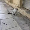 アテネのアクロポリス近くの安心宿にチェックイン。ギリシャは猫の国だった(世界の猫探し124~131匹目)