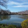 桜舞う季節 2 近くの桜の名所