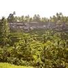 バリ島のウブドにある神の階段!テガラランのライステラス