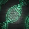 SBC#30 [遺伝子も社会を作る?] - 遺伝子の社会