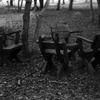 10月のフィルム写真ー2ーSummitar 5cm f2