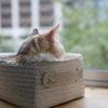 一人暮らしと猫。失敗しない上手な共存方法とは!?