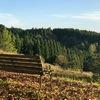 【南小国】蔵迫温泉オートヴィレッジさくらはあの有名人も訪れた絶景キャンプ場!
