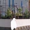生け垣変更計画近況2