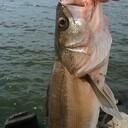 牧野のGIJIE LAB.【千葉・茨城でルアー釣りがしたいんですよ】