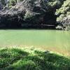 久々の野池