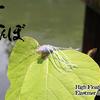 【ジャッカル】遠距離アプローチ可能のインナーコア搭載の虫系ルアー「直とんぼ」通販予約受付開始!