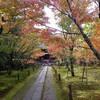 秋の京都観光!御朱印集め🍁紅葉狩り『一休寺』とコストコお買い物
