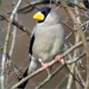 「フィロソフィー」と鳴く鳥