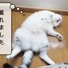猫用語 ~トイレハイ~
