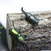 我が家の昆虫