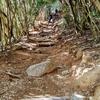 小さな子でも登れる絶景『糸島のトトロの森』