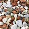 オルレアのこぼれ種から出た芽があちこちに。