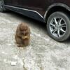中国 野生の猿に会いに行ってきた!