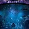 ビアガーデンと江の島水族館に行ってきました!