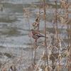 「七北田公園探鳥会」その5、ルミックスFZ-85で色々な野鳥を撮影!