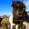 〜大自然〜  レンタカーアイスランド一周