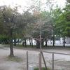 城を望む楓樹