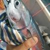 オオモリボートでソウダフェス!!!👯👯 18年7月下旬。