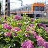 撮り鉄日記 ~井の頭線・西武池袋駅~ 2018/6/9